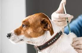 Rússia aprova primeira vacina para animais